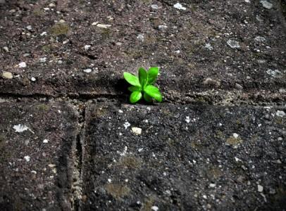 1t0vh 406x300 Growth, an original poem by PoetryGrrrl