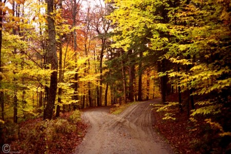 The Road Not Taken by Robert Frost | Online Poetry Archives